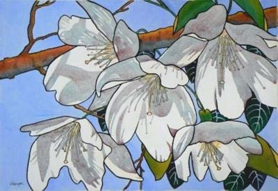 Sunlight on Spring Blossom