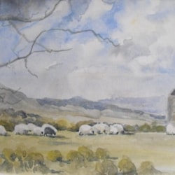Sheep grazing, Minnions Cornwall