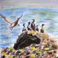 Sea birds sketch.....