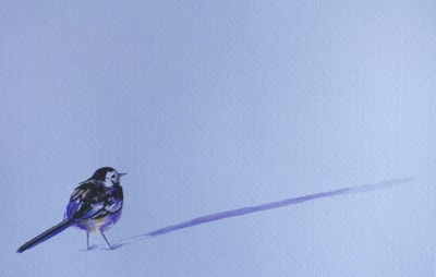 Small bird, long shadow