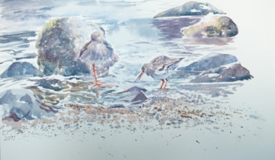 Redshank on the shore