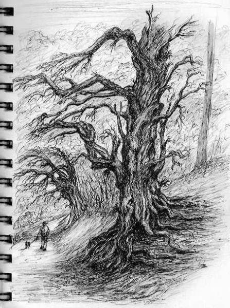 Wenlock Edge Yews