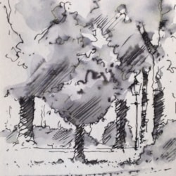 Harrogate Trees - Sketch