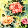 Random Roses