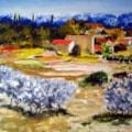 olive grove provence