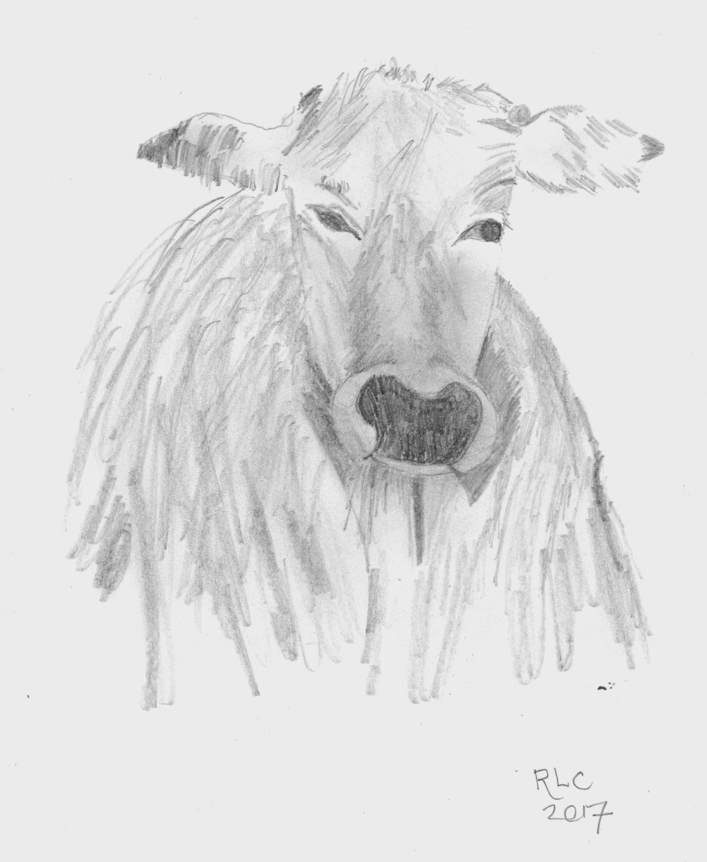 Cows are lovely animals