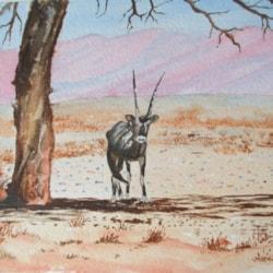 A Gemsbok taking the shade in Namibia