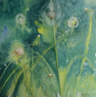 Dandelion Hedgerow
