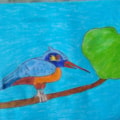 KING FISHER- BIRD