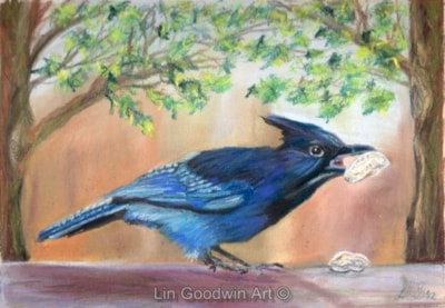 Buddy Blue Jay