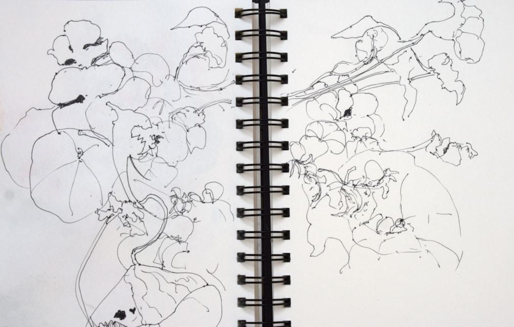 Nasties Sketch