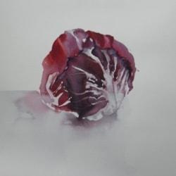 Radicchio  Rosso di Chioggia - Red Raddicchio