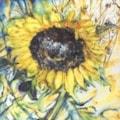 Sunflower in tartan