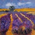 Shropshire Lavender