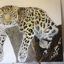 A snow leopard ?? at rest