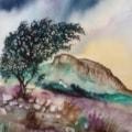 Windswept hawthorn shrouding Garn Fechan - Pembrokeshire