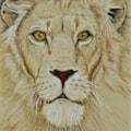 The Lion's Stare