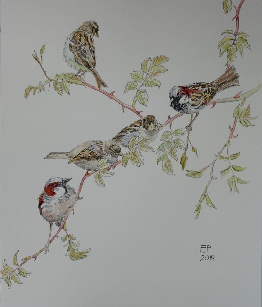 """A branch of the sparrow family (9""""x12"""")"""