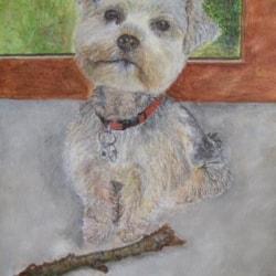 Portrait of my dog, Tchoky