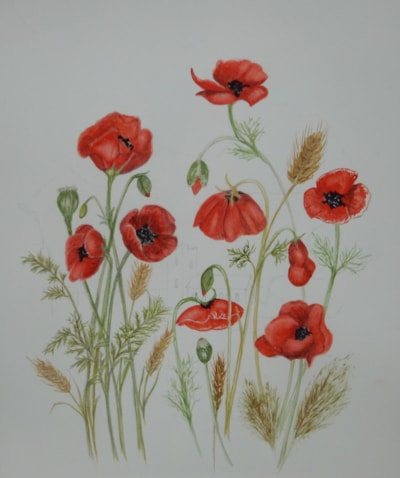 REMEMBRANCE POPPIES. (Before)