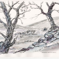Old Hawthorns