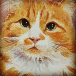 Dave the Ginger cat
