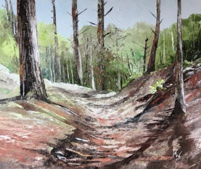 Forest sunlight 2