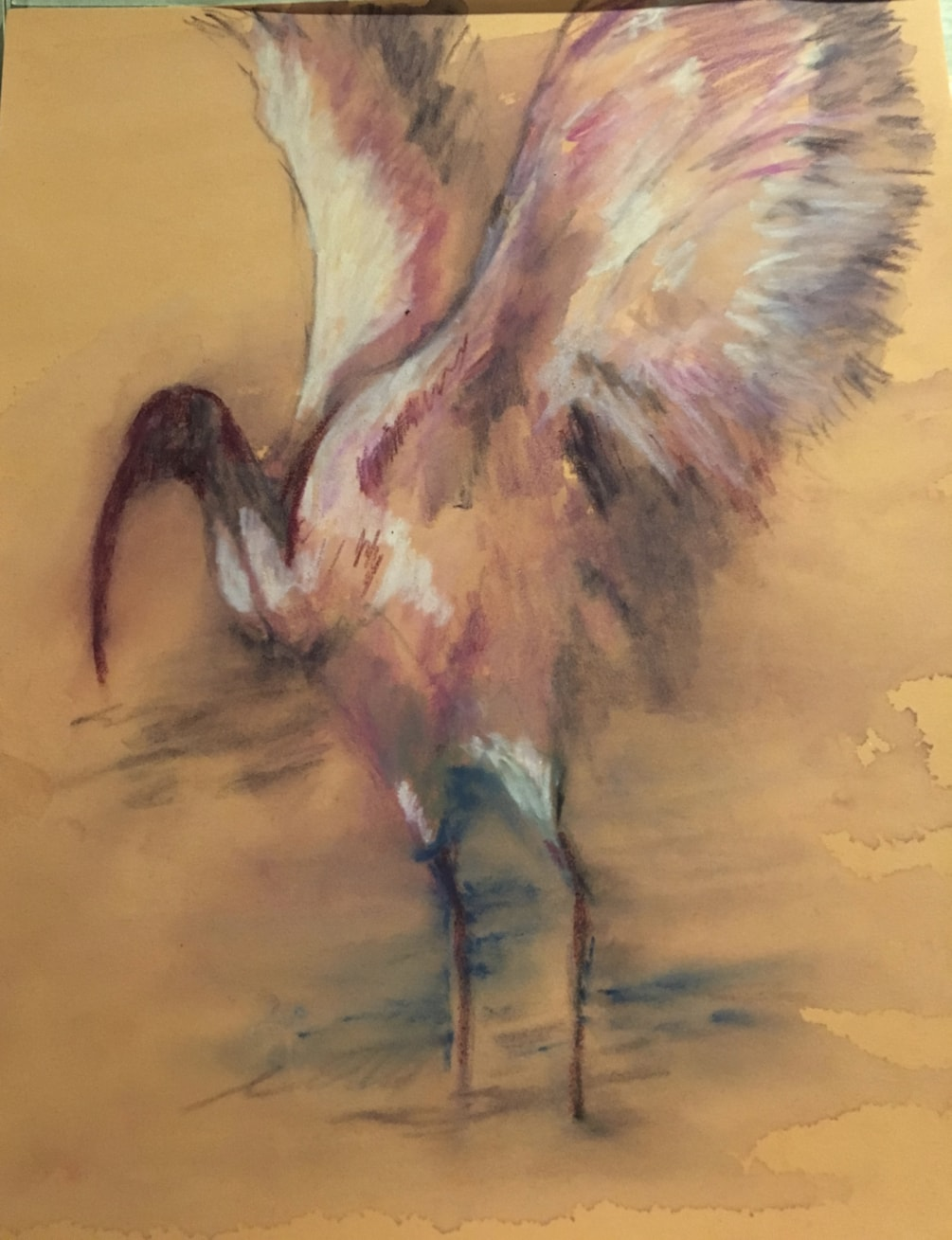 African Ibis Study for a larger painting