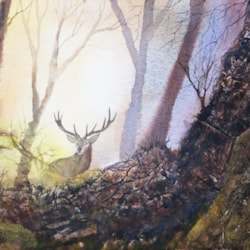 Stag In The Woods At Sunrise