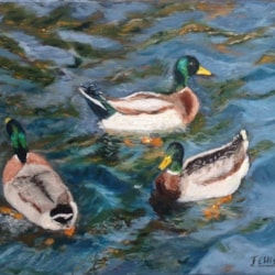 ducks in rough waters (2)