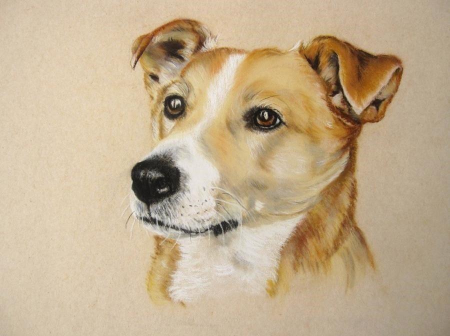 Little Brown Dog