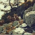 Rocks and Bighorns
