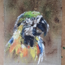 Today just started - a macaw