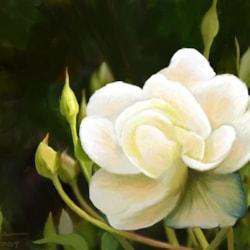 Buds & Blossom