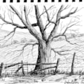 Oak, Whiteley Green #1