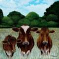 Three Guernsey cows