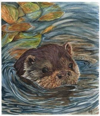 i'm where i Otter be!!