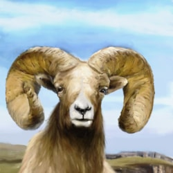 Sheepish Outlook