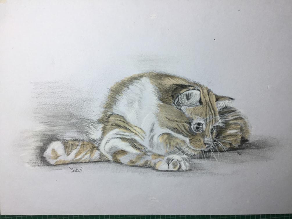 Marion's cat