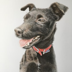 Pip, black Patterdale