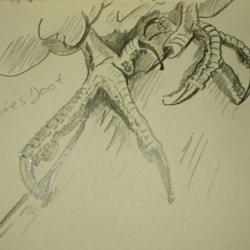 Peregrines feet