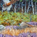 Detail of Pheasants Over The Heather