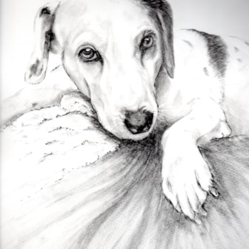 dog draw20200722_14490114