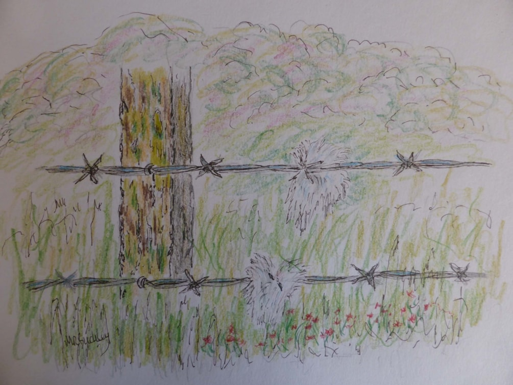 Wool and Wire . pen and coloured pencil