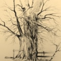 Oak Tree Study 2