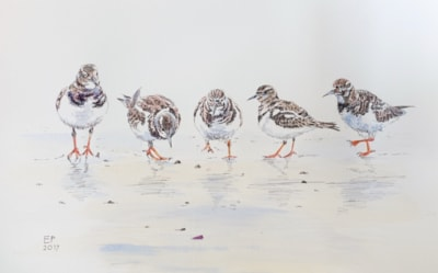 Turnstones on the beach, misty morning (ink and wash)