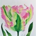 Parrot Tulip 1
