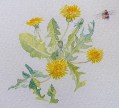 Dandelion and bumblebee