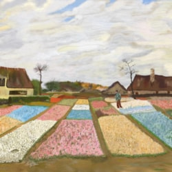 Reproduction of Flower Beds In Holland