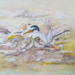 Endangered Wildlife: Little Terns